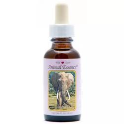 Elephant (olifant)