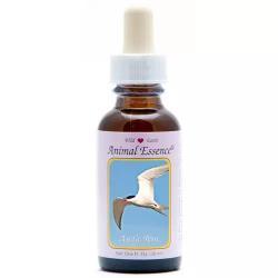 Arctic tern (noordse stern)